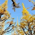 銀杏盛開美不盛收?這種植物跟恐龍一樣老,還會自動「性轉換」!揭開關於銀杏的四個小秘密