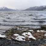 讓上百萬隻海鳥集體暴斃的元兇找到了!海洋熱浪扯斷海底食物鏈,掠食者活活餓死