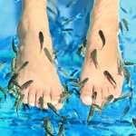 別再花錢找小魚吃腳皮了!不只虐待動物還可能傳染病菌,還可能併發這些風險