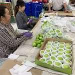 高雄市政府農產強化內外銷分流 聯手農友「棗」幸福