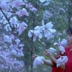訂閱人數超越CNN!中國第一「國際網紅」李子柒:無心插柳的中國故事或文化輸出?