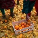 義大利中世紀古鎮狂歡節──柳橙大戰