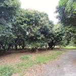 百年荔枝林搶救成功 中市原東山段社宅變成自然果樹森林