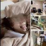 「大概是我奶太大!」網美被隔離還酸醫護  醫師氣炸:我他媽的犧牲是這樣糟蹋的嗎?