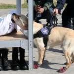 揭露「狗官」上班實況!檢疫、偵爆、緝毒全包 3種類型最容易被「錄取」