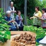 沖繩居民健康長壽的秘密 期間限定藏在哈肯鋪麵包西點裡