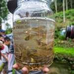 推動里山一新在地實踐 水保局今年擴大台灣白魚復育行動
