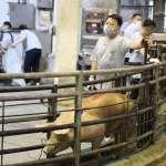 睽違23年!台灣本周撕掉口蹄疫區標籤 生鮮豬肉下半年恢復出口