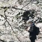 東京、大阪最快明天軟性封城!日媒:安倍晉三即將宣布「緊急事態」