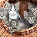 貓奴看過來!《科學》期刊最新研究:貓比狗更易感染新冠病毒!