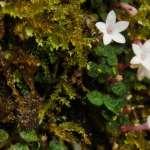那些讓人困惑的,關於屬與種的二三事:《通往世界的植物》選摘(1)