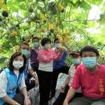 種瓜達人在彰化 經驗豐富種出多種瓜類創造經濟價值