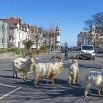 新冠肺炎・全球封鎖》空氣更清新、動物逛大街……沒有人類環境更美好?
