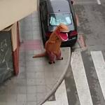 遛母雞、牽假狗、扮恐龍……禁足在家太無聊 西班牙民眾為了出門花招百出