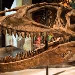 充斥凶猛肉食恐龍、水中魚像汽車一樣大……最新研究:撒哈拉沙漠是1億年前地球最危險的地方!