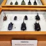 科博館展出世界級兜蟲蒐藏 展期即日起至110年3月止