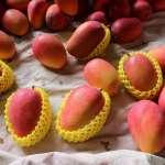 一顆要價數百元!台灣「蜜雪」芒果紅到海外,香港議員開會空檔也忙著搶購
