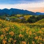 全台最美公路在這裡!絕美金黃花海、一望無際翠綠稻田,從北到南10處公路美景一次網羅