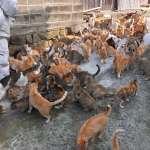 九州「貓之島」離奇死亡案:島上近百隻貓咪只剩30隻,竟是80多歲島上居民幹的