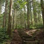 木材比原油、銅礦還會漲?解析林業股成為市場強者的關鍵因素