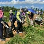 守護生態平衡 中市示範拔除500公斤外來植物