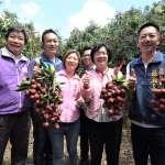 食在地、享當季 到彰化縣遊玩體驗荔枝採果趣