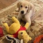 「我的狗狗最愛小熊維尼!」美國務卿龐畢歐爭議推特,是否暗諷習近平?