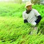 杜宇觀點:台灣農業數位化的腳步遲緩!
