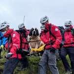 救援任務:55公斤重的聖伯納!搜救犬在英國最高峰走不動,16名救難隊員接力扛「她」下山