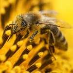 搶救蜜蜂大作戰》亂糟糟才自然!德國環保新政:打造「野花草地」提升生物多樣性