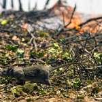 人類掠奪大自然的後果!英國研究團隊證實:土地開發增加「動物傳人疾病」風險