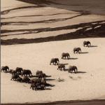 她花11年解決盜獵問題 肯亞Milgis草原象群倍增、成當地第2大象群遷徙路線