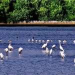 打造高雄永續生態   永安濕地率先通過保育利用核定