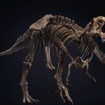 史上最大暴龍化石「史丹」下月拍賣 成交價上看2億3000萬元!