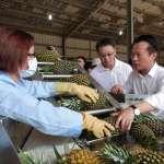 智能化省工省時設備  助攻鳳梨產業轉型新契機