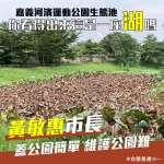 基進黨批生態池荷花枯萎「噁心」 朱學恒狠酸:不知道秋天花會枯?