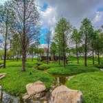【2020台中景點】美到像幅畫!限時開放浮島森林、韓系芒草原…公開台中7個絕美景點