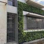 中市府力推校園植樹綠牆 年減逾9公斤碳