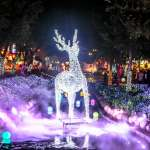 台中柳川耶誕燈會搶先看!首推水舞燈光秀,璀璨光芒照亮水岸