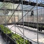 北梅國中研究農業科學防蟲害有成 教學溫室啟用升級創三贏
