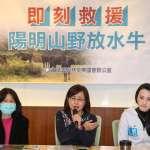 陽明山3分之1水牛死亡 動保團體追真相:架設鐵絲網導致棲地牧草不足