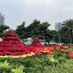 冬季高雄繽紛賞花趣 鮮豔植物彩繪市容變美麗