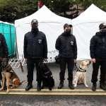 北市跨年維安小組亮相 4萌犬搜索爆裂物可愛模樣曝光
