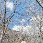 2021賞櫻景點》誰說櫻花季一定要去日本看?盤點全台9條最夢幻賞櫻秘境,實在美到太不真實!