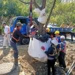 展現高雄市府對護樹重視度 輕軌施工前請專家指導樹木移株