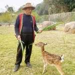 逐鹿社區取得許可 春節前合法營業