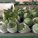 高雄美濃木瓜今年外銷首發 新年走春到香港