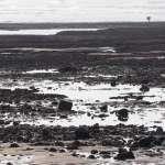 70萬連署救大潭藻礁,公投是怎麼產生的?律師一篇文揭最重要的5步驟,看完不再霧煞煞