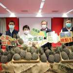 中市助銷30噸鳳梨 盧秀燕:幫助農民不分縣市