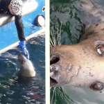 一隻全盲海豹、還有一個疼愛牠的漁夫:英國曼島一段長達十年的跨物種友誼